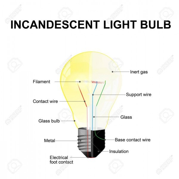 Science Diagrams Of Bulb